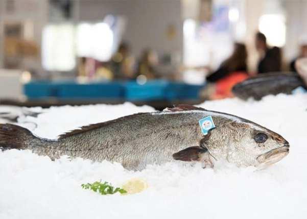 tutoriales sobre el pescado