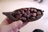 Kakao-Bohnen