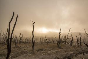 Une forêt d'arbre mort