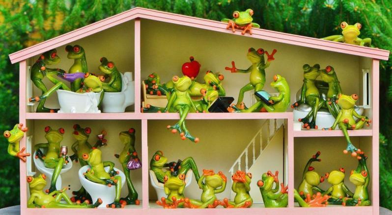 Des grenouilles dans une maison pour enfant
