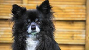 Un chien au regard critique