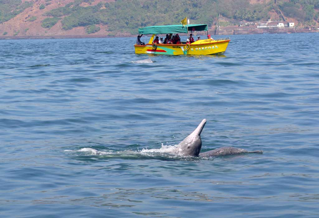 dolphin-cruise-safari-goa