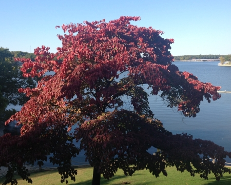 Fall Foliage Grand Lake OK