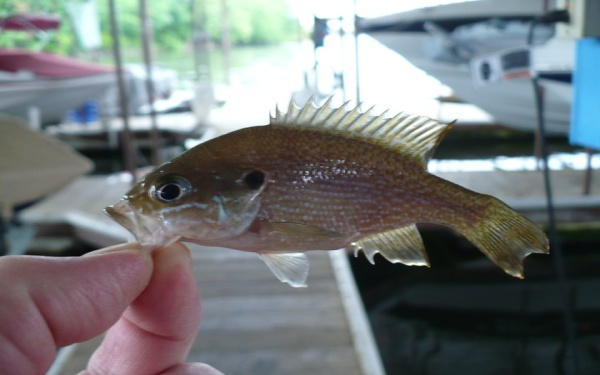 August 2014 Grand Lake Fishing Reports