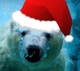Polar Bear Plunge at Grand Lake