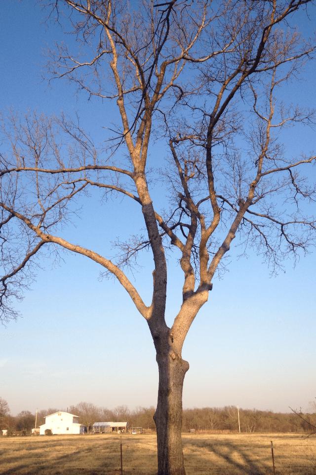 Tree trimming Langley OK