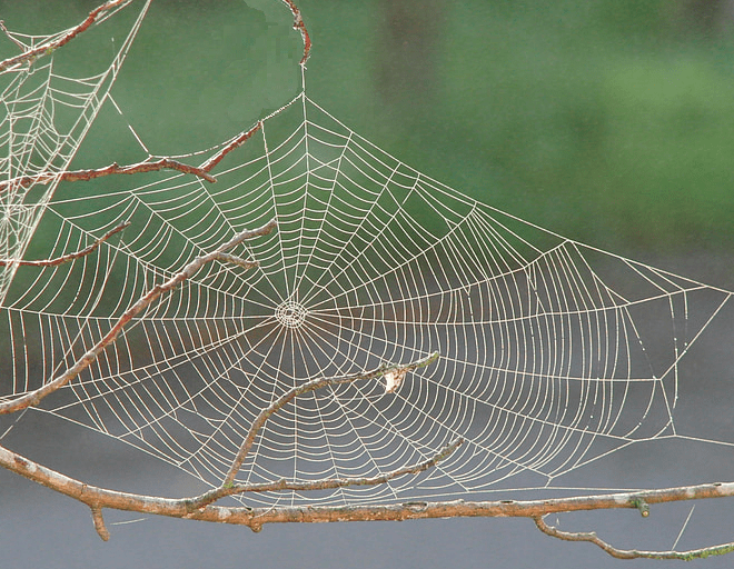 A Spider's Tale