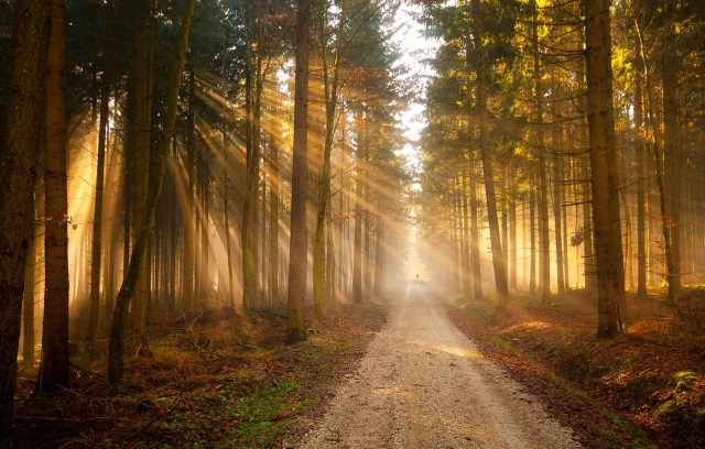nature-landscapes_other_beautiful-forest_1989