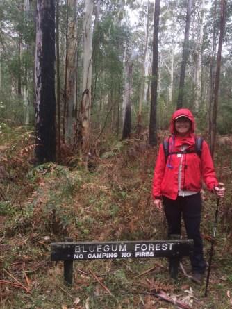 bluegumforest5