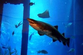aquarium at mall