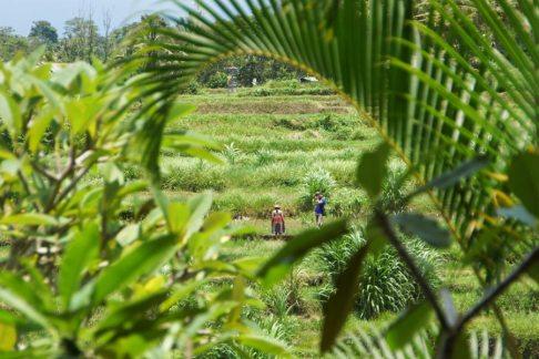 Ubud workers