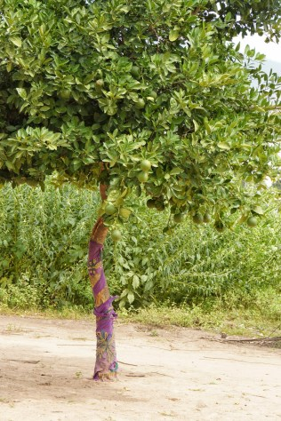 Tree in Gambian country side