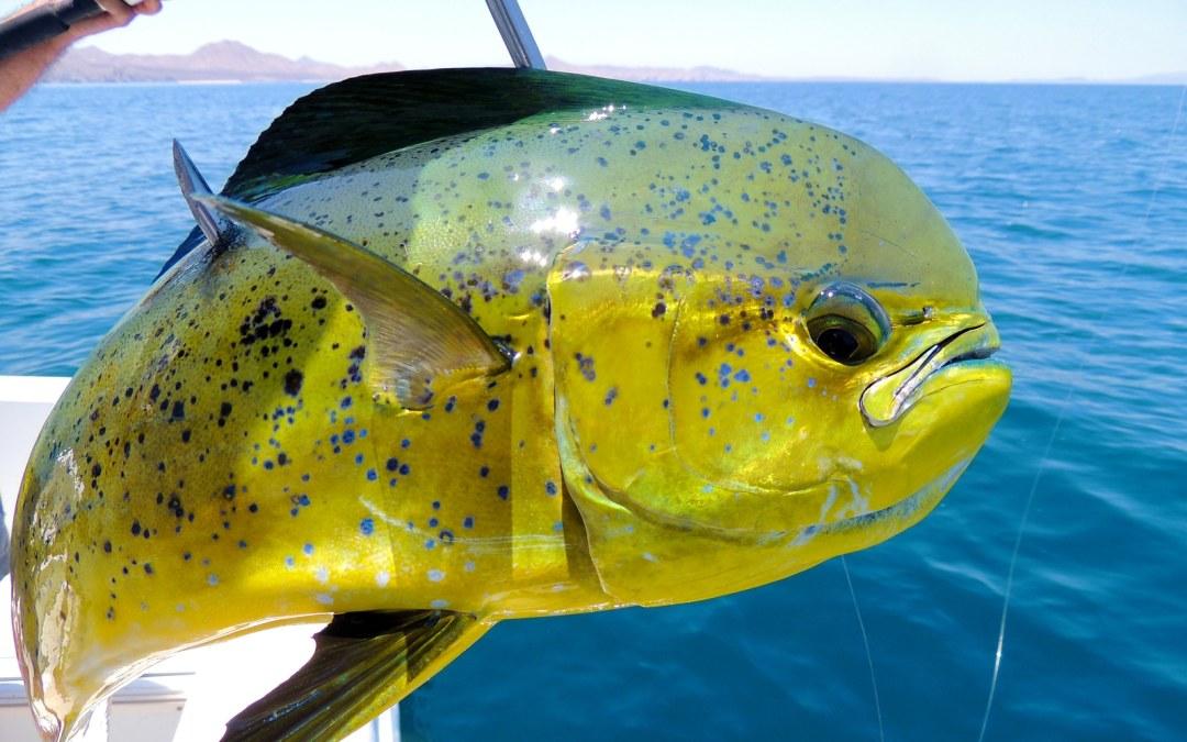 Rancho San Lucas Explores Summer Fishing in Los Cabos