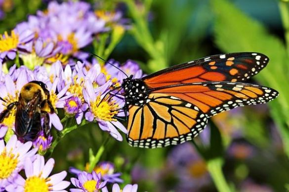 Butterfly And Bee Attracting Flowers For Your Garden flowers for bees and butterflies