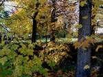 Autumn glory-1