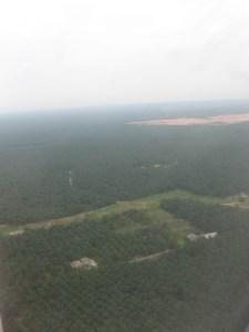 forest frag - oil palm