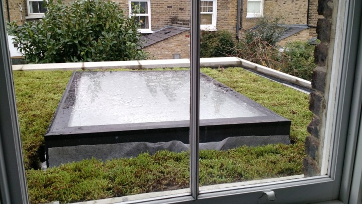 Picture of a flat roof in london, with a skylight, that has moss growing on top