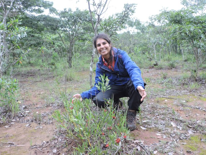 Toral in Iringa, Tanzania bending down next to her study plants, Ochna © Toral Shah
