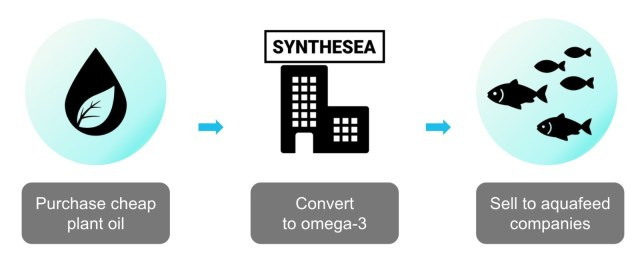 Graphic showing The Synthesea process: Purchase cheap plant oil, convert to omega-3, sell to aquafeed companies