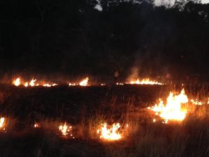patches of fire burn on a grassy field in a dark landscape with trees in the background