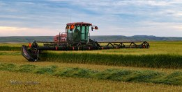 Swathing the Barley
