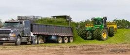 Truck unloading chopped barley