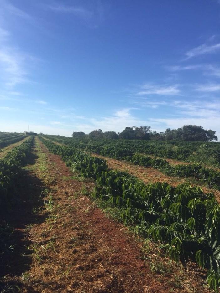 Fazenda Guariroba
