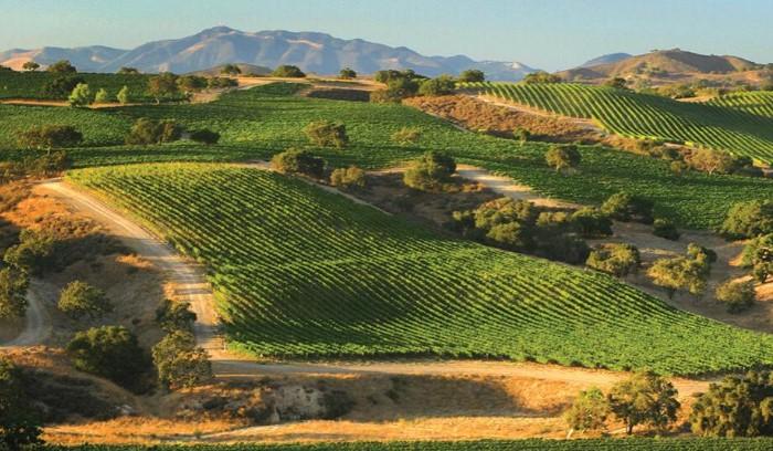 Santa Rita Hills Wine Trail