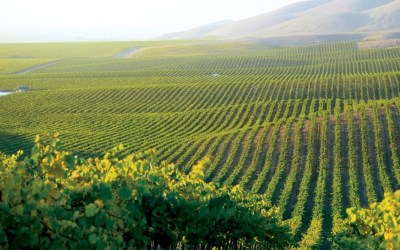 Central Coast Wine Country ~ One of California's Most Intriguing and Hidden Wine Regions