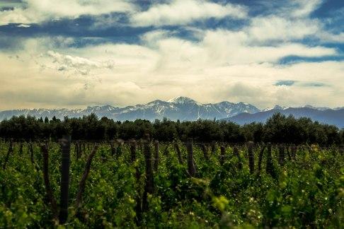 mountains-over-cecchin-vinyard-maipu-mendoza