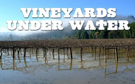 Flooded Vineyard