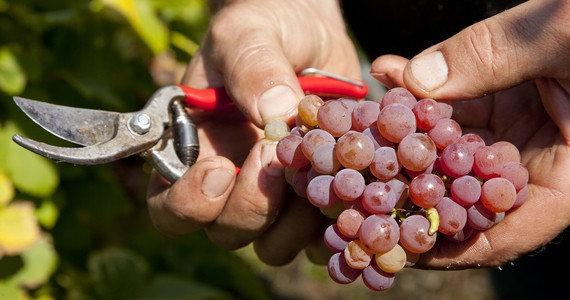 Colmar Wine Tasting