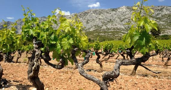 Provence Wine Tour- Credits R. Cintas Flores (1)