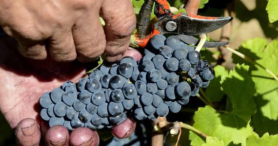 Ribera del Duero Tour - Credits Chateau de Cabezac Grapes