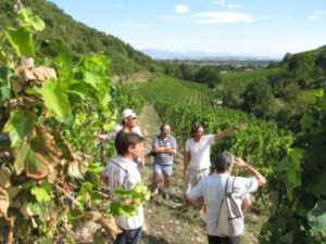 Rhone Crussol Vineyards