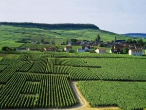 Champagne Vineyards- Credits ©JK Gräber