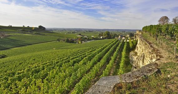 wine tasting Bordeaux - Credits Heurisko