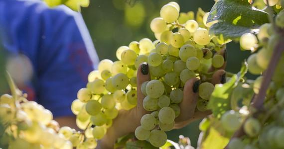 Prosecco wines - Credits Bottega Spa