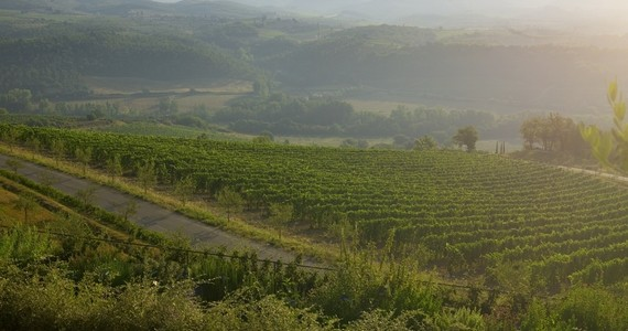 Wine Tour Booking - Credits Fontanelle