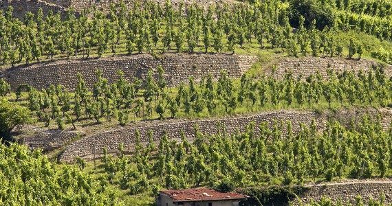 Rhone Valley Tour - Credits Tain L'Hermitage