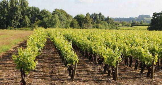 Loire Valley Trip - IMG0681
