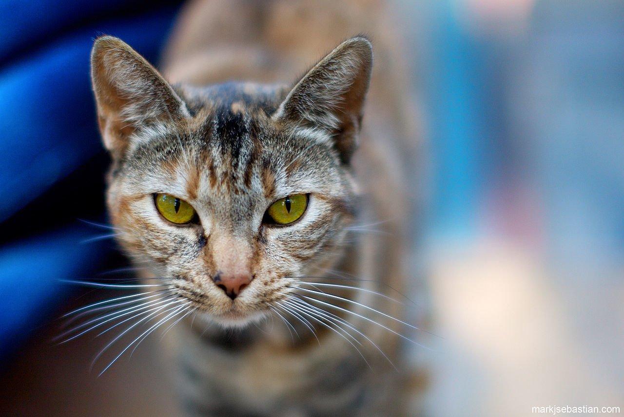 Norwegian Stowaway Cat Returns Home, Gets Icelandic Name