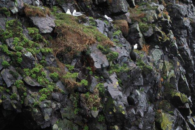 4 Cliff