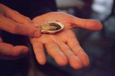 4.Skelfiskmarkadurinn-JulietteRowland-