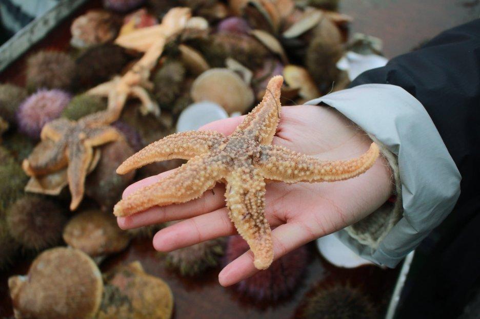 8 Starfish_1