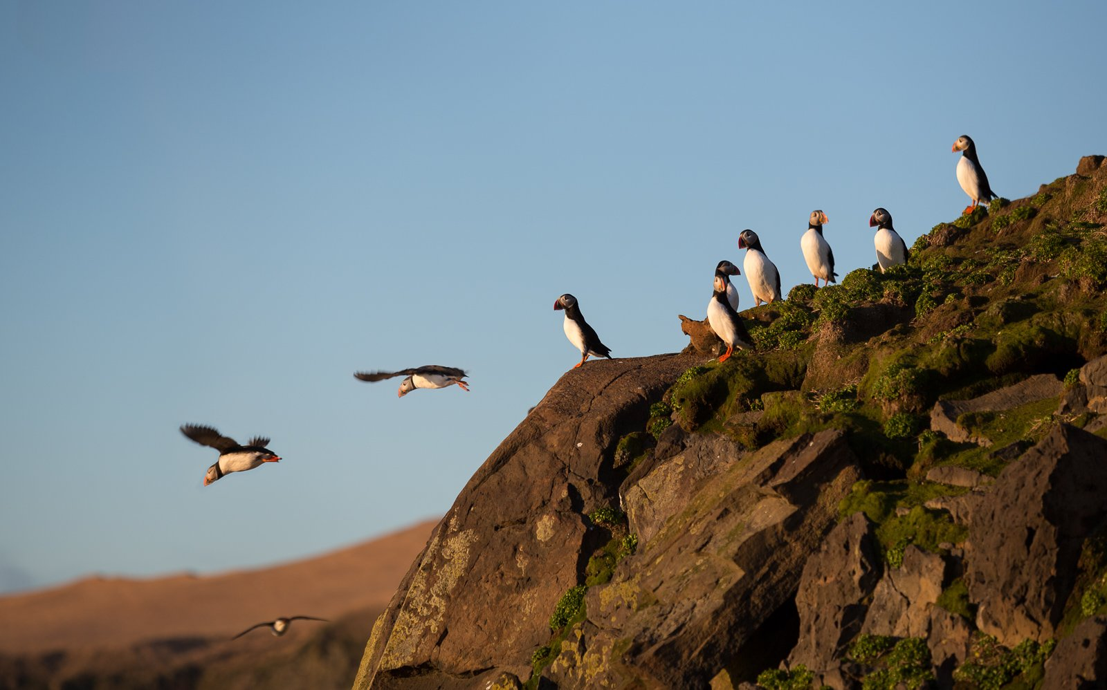 Ask A Zoologist: Why Are We Able To See Puffins Only During A Few Months?