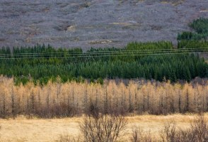 Ask A Forester: Why Are There So Few Trees In Iceland?