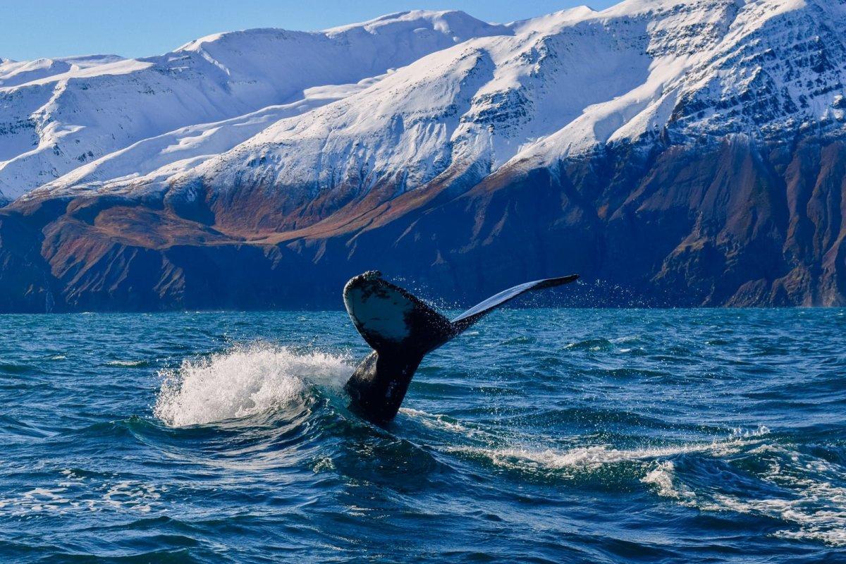 Of Space, Whales And Antarctica: An Enlightening Weekend In Húsavík