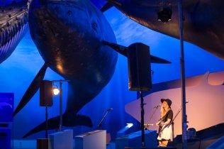 I Am Soyuz at Whales Iceland