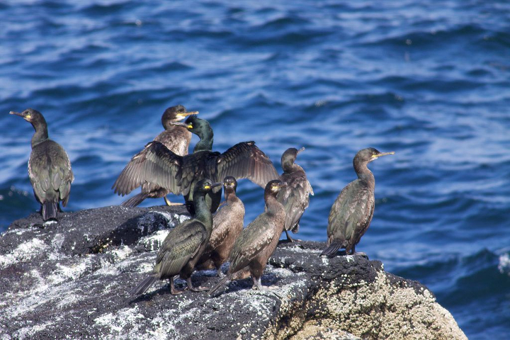 Disease Likely Explanation For Mysterious Bird Deaths